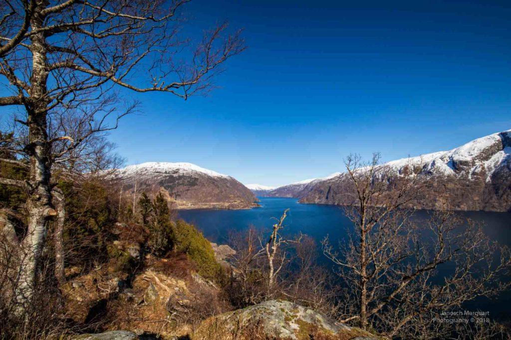 Blick durch Bäume auf den Hardangerfjord