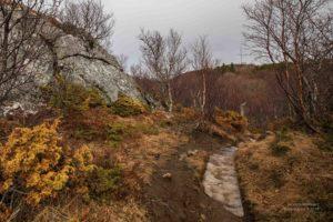 Foto eines mit Eis belegten Waldweges in Norwegen.