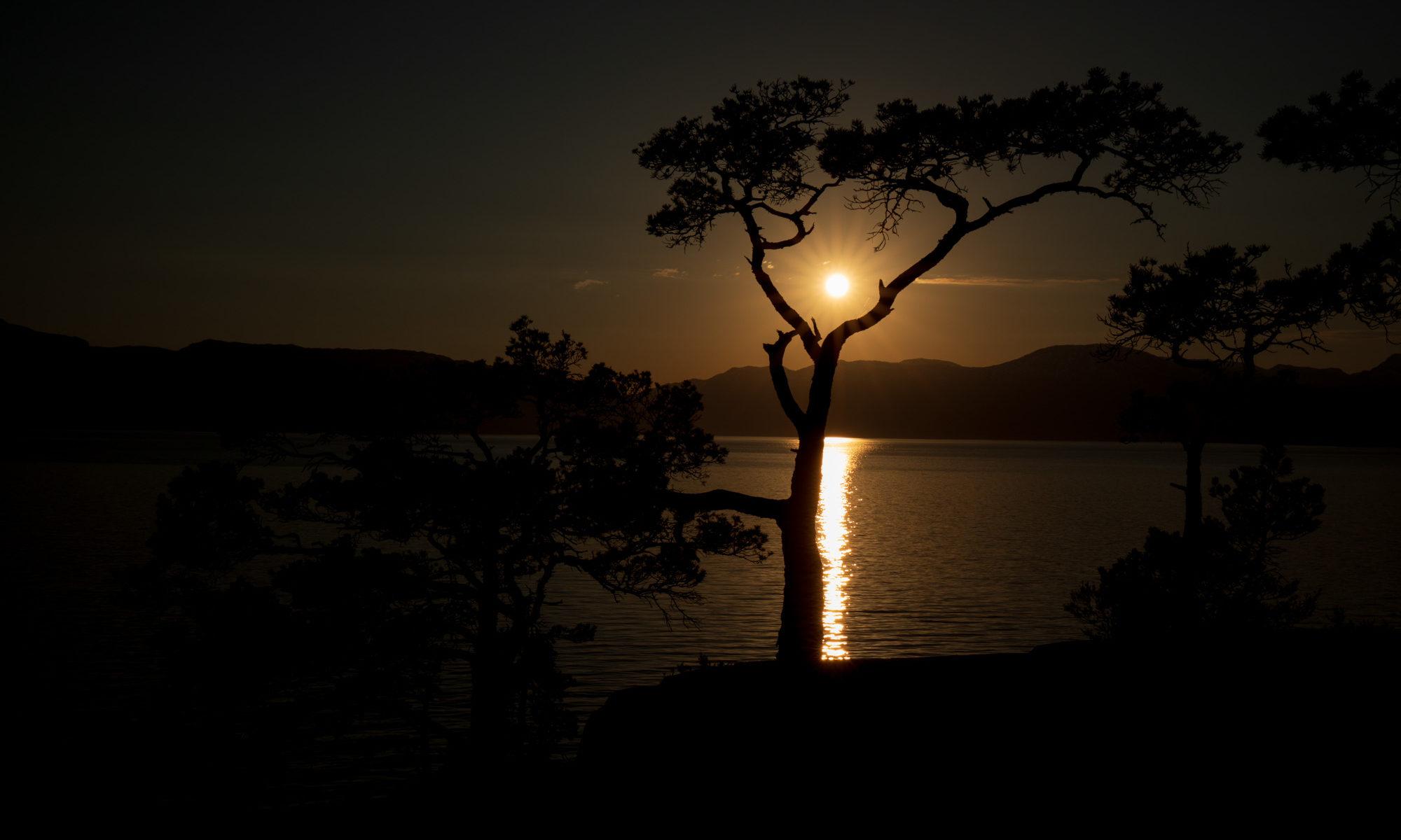 Foto eins Sonnuntergangs mit Baumsihlouette am Hardangerfjord