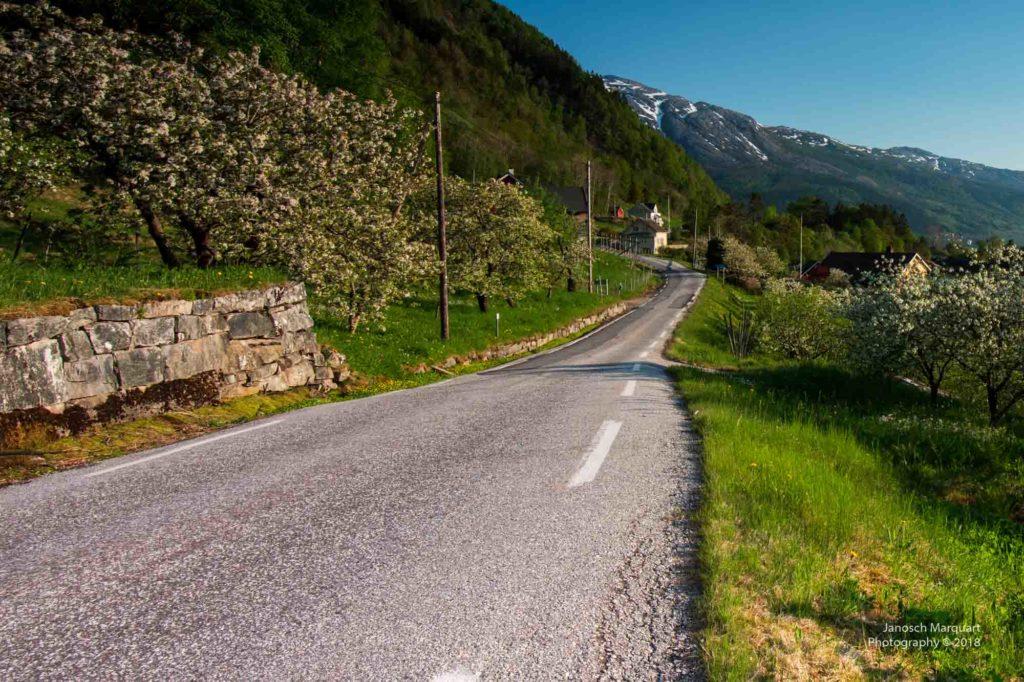 Foto einer alten und schmalen Strasse entlang des Hardangerfjords.