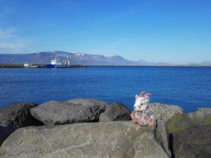 Balznerbock sitzt auf Steinen im Hafen von Reykjavik und geniesst die Sonne.
