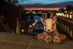 Balznerbock sitzt in der Nacht auf der Mauer. Im Hintergrund der Kanal von Ottawa.