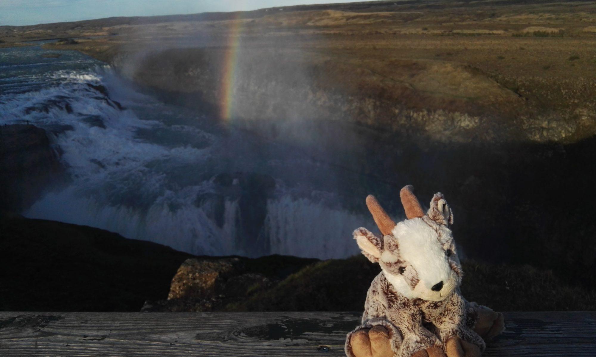 Der Balznerbock sitzt vor dem Gulfoss Wasserfall. Im Hintergrund ein Regenbogen.