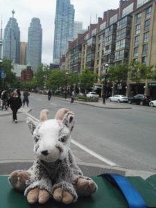 Balznerbock sitzt mitten in Toronto. Im Hintergrund die Strasse und einige Hochhäuser.