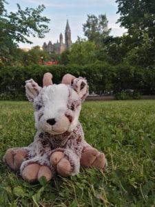 Balznerbock sitzt im Gras, im Hinterrund sieht man den Parliament Hill.
