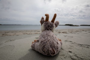 Balznerbock sitzt am Strand