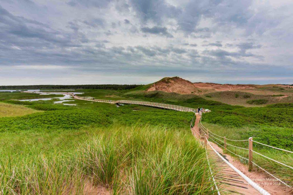Foto des Boardwalks durch ein Feuchtgebiet im PEI Nationalpark.