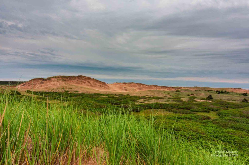 Foto von Dünen im PEI Nationalpark.