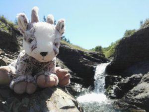 Balznerbock sitzt auf einem Stein. Im Hintergrund ein kleiner Wasserfall