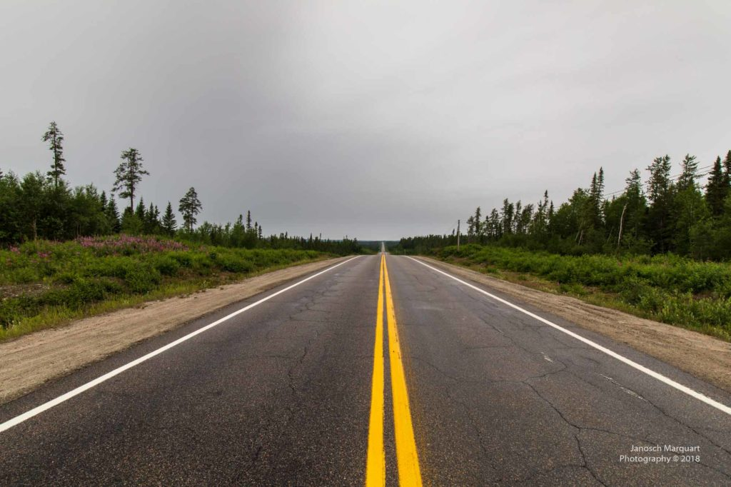 Foto einer Strasse bis an den Horizont im Wald.