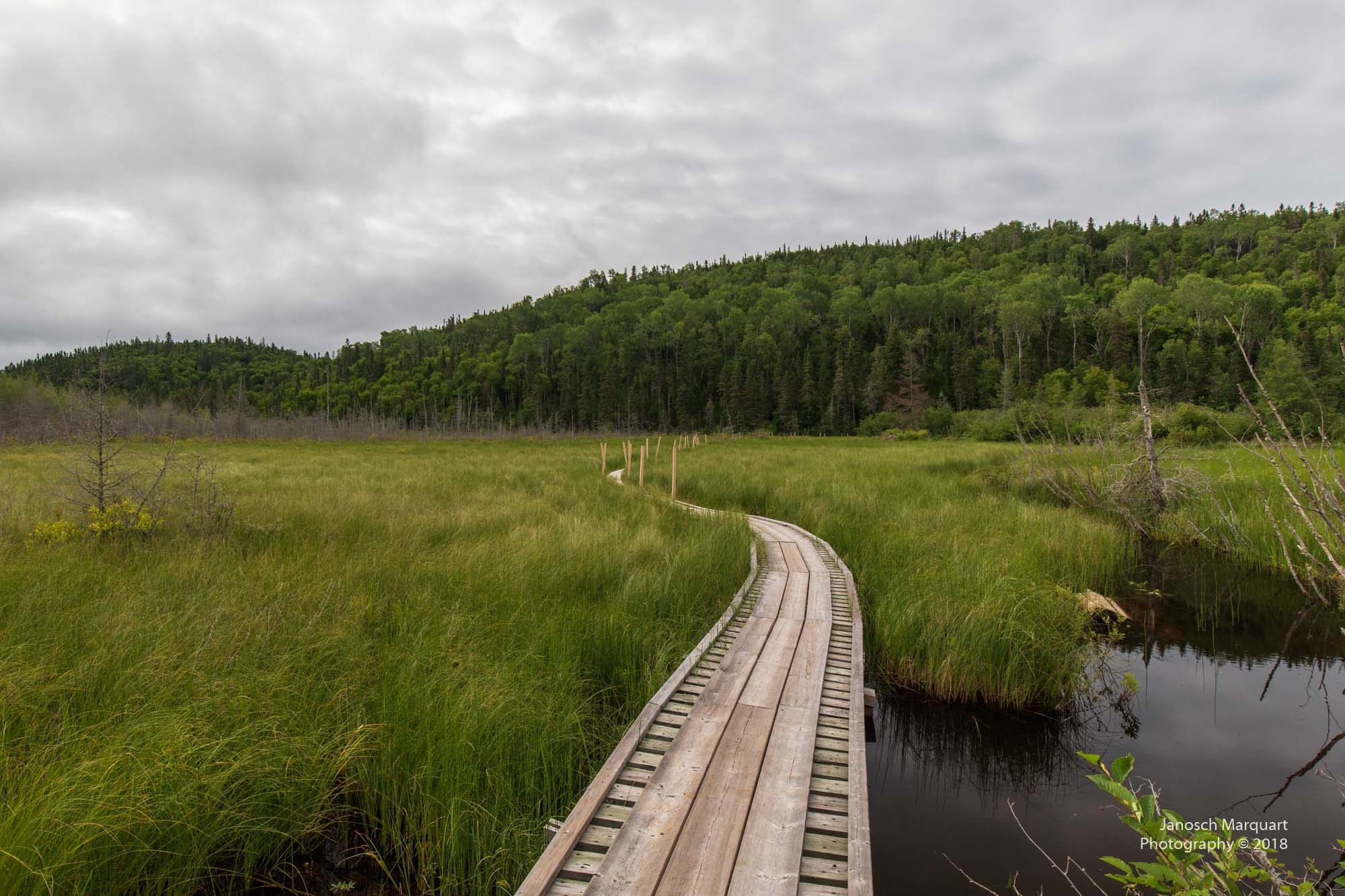 Foto eines einfachen Boardwalks über Sumpfgebiet.