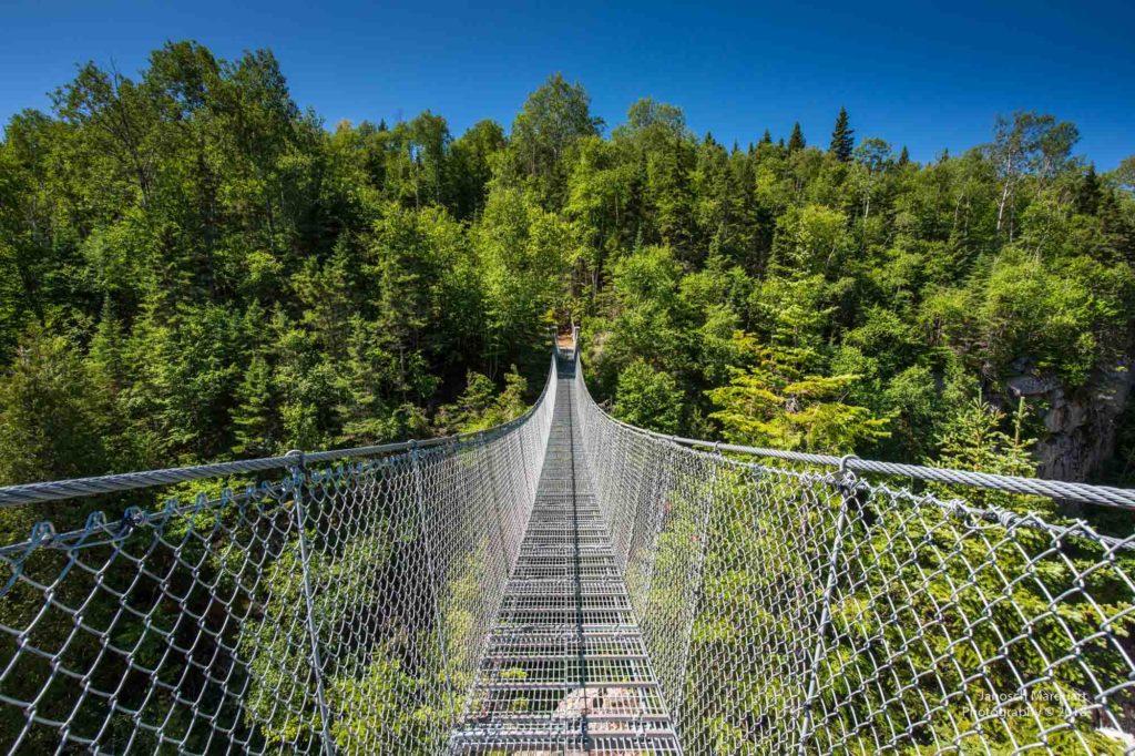 Foto einer Hängebrücke im Wald von oben.