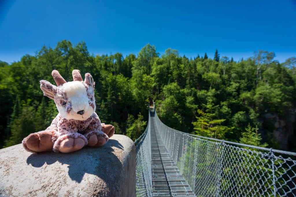 Balznerbock sitzt auf einem Stein. im Hintergrund die Hängebrücke.
