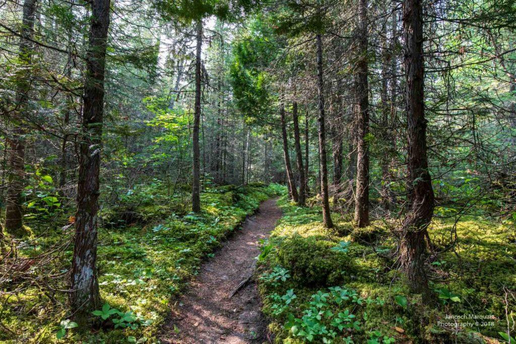 Foto eines Waldweges im Pukaskwa Nationalpark