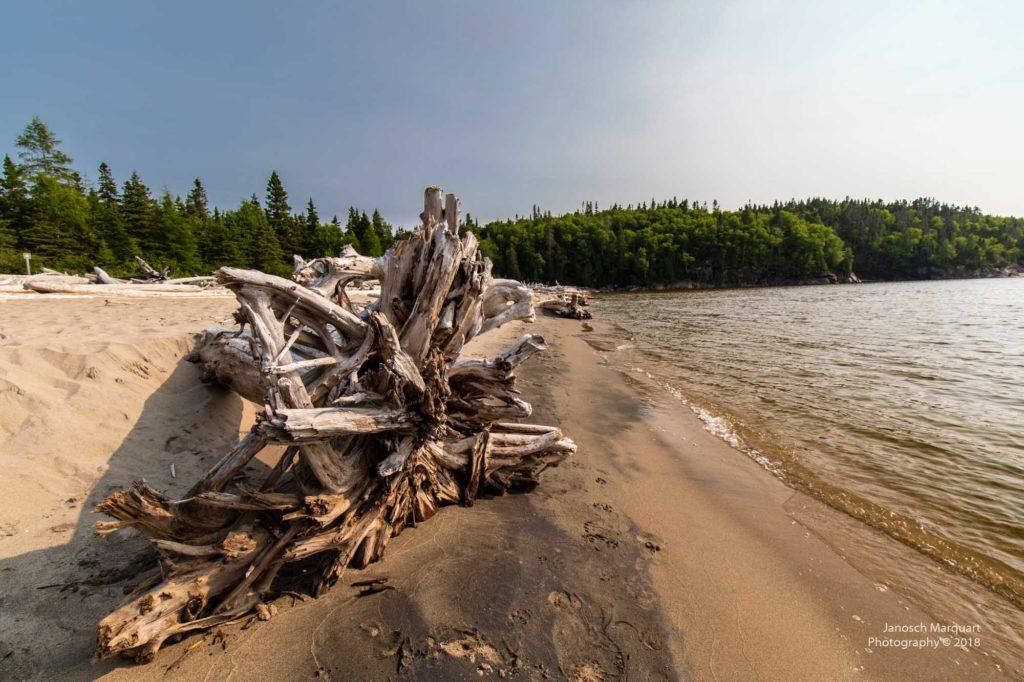 Foto von Schwemmholz am Lake Superior