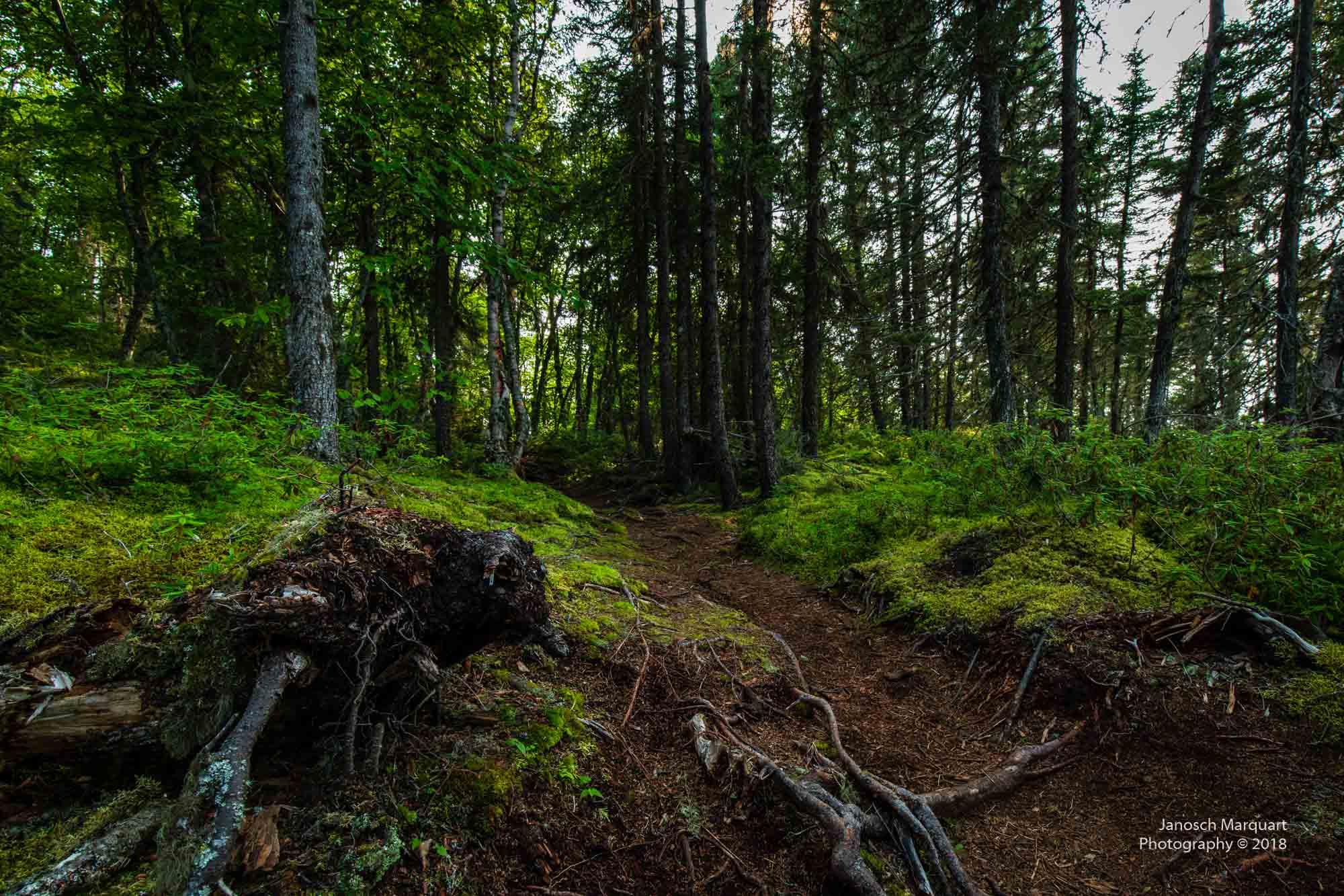 Foto eines Waldweges mit vielen Wurzeln darauf.