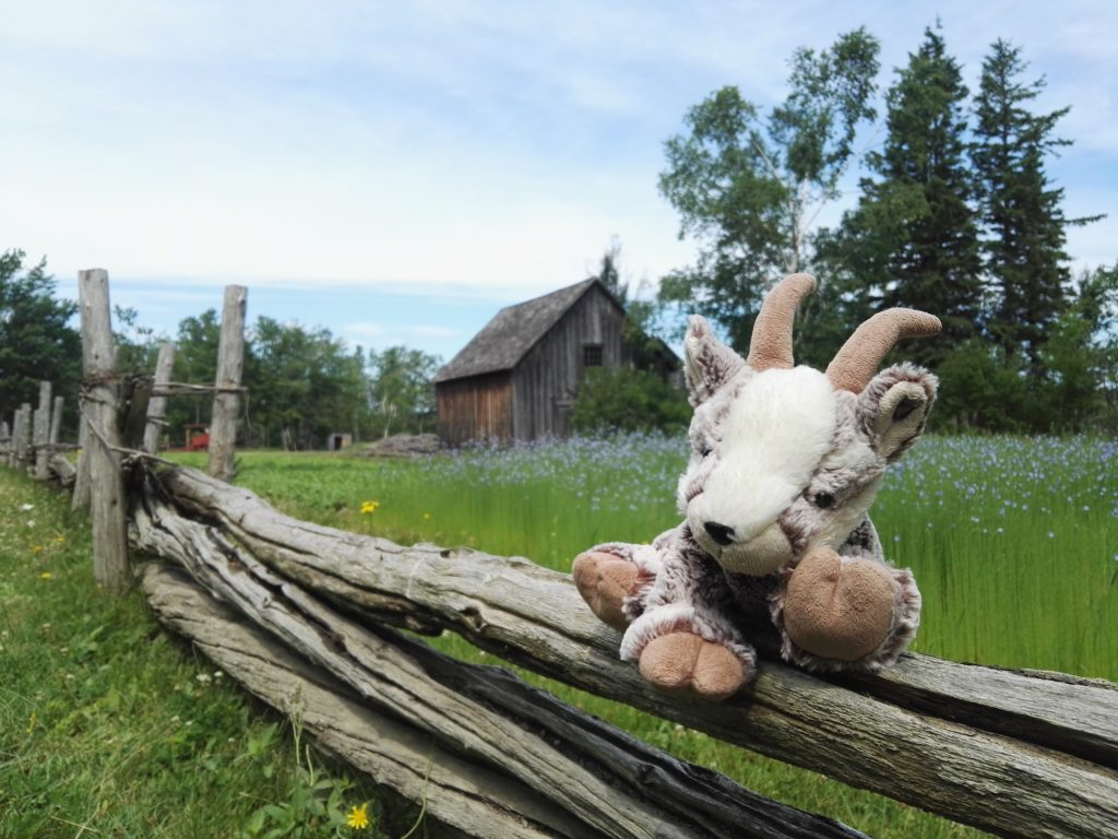Balznerbock sitzt müde auf einem Zaun im Acadian Village