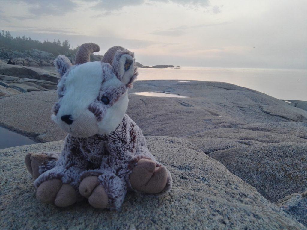 Balznerbock sitzt auf dem Felsen