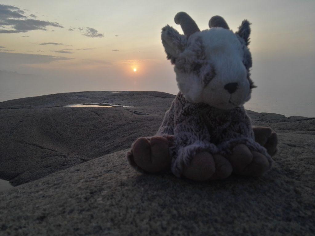 Balznerbock sitzt auf dem Felsen während dem die Sonne aufgeht.
