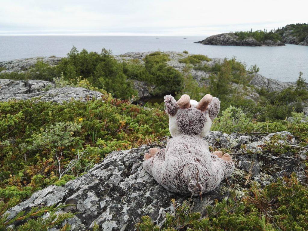 Balznerbock sit auf einem Stein im Pukaskwa Nationalpark und blickt auf den Lake Superior