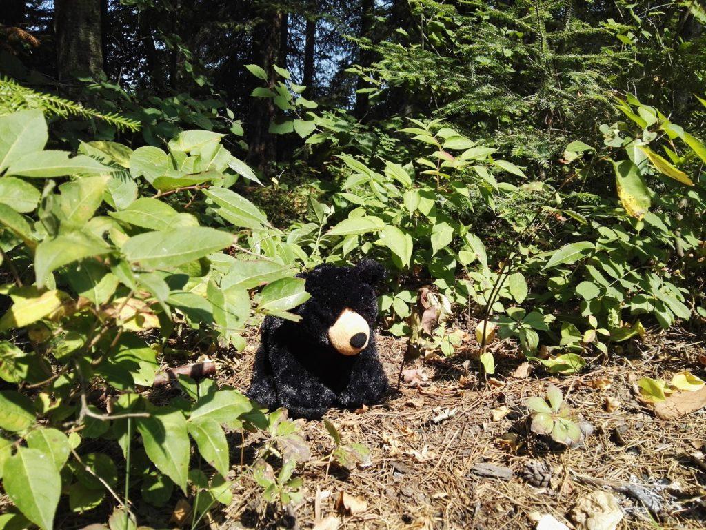 Im Gebüsch steht ein kleiner Bär