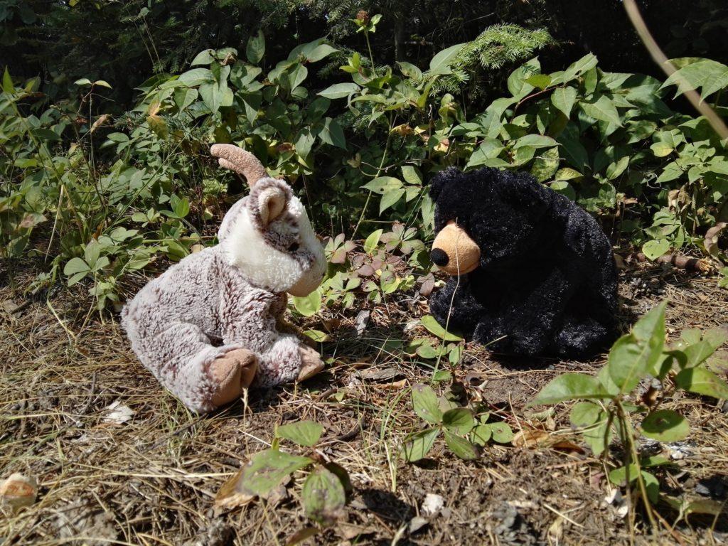 Balznerbock und der Bär unterhalten sich.