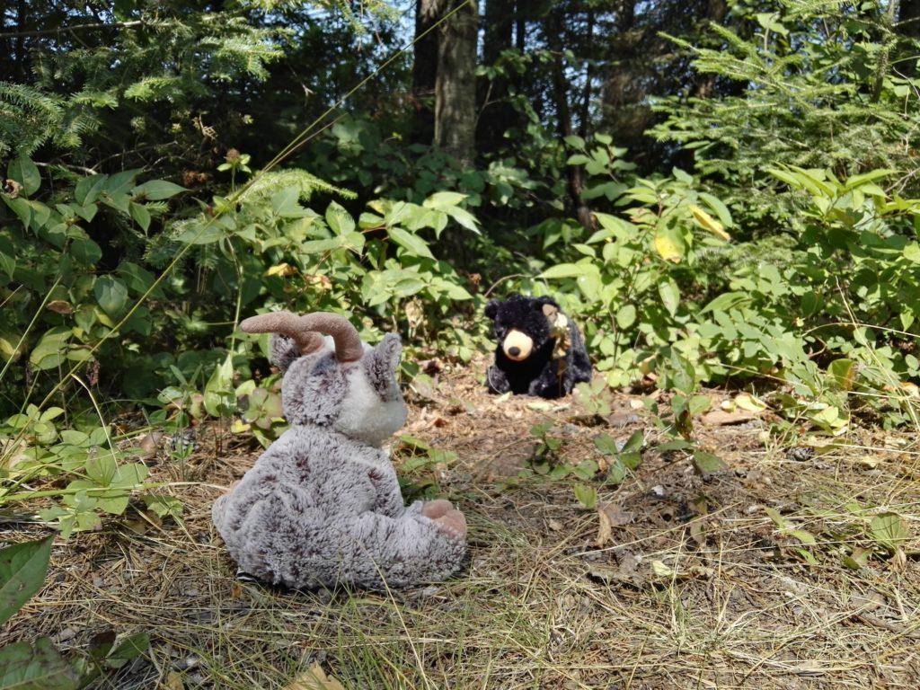Balznerbock und Bär stehen sich gegenüber