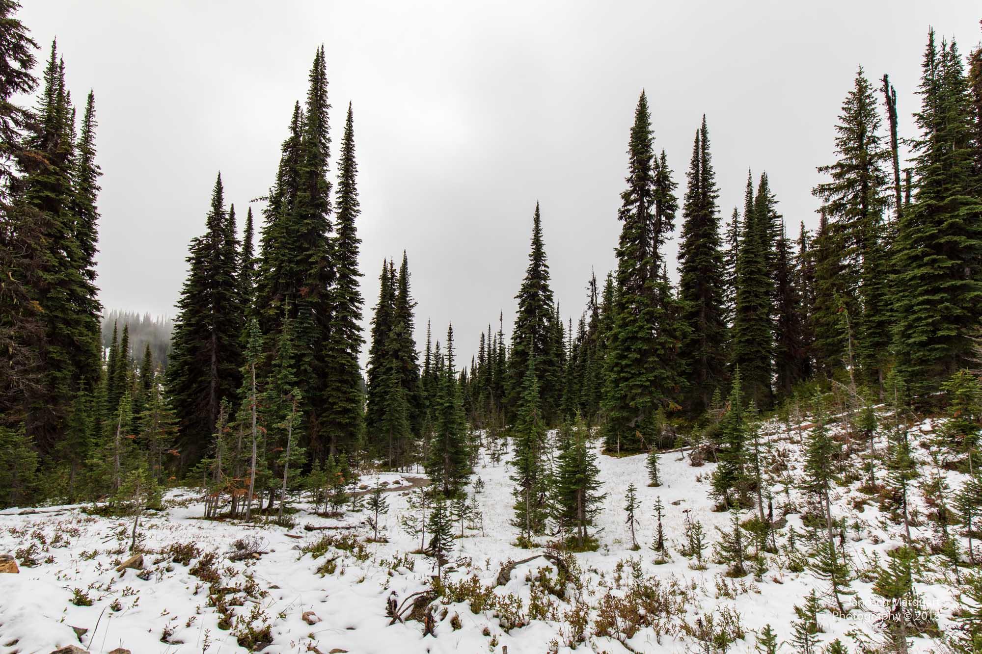 Verschneiter Wald auf dem Mt. Revelstoke.