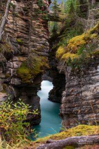 Canyon mit türkisblauem Wasser bei den Althabasca Falls.
