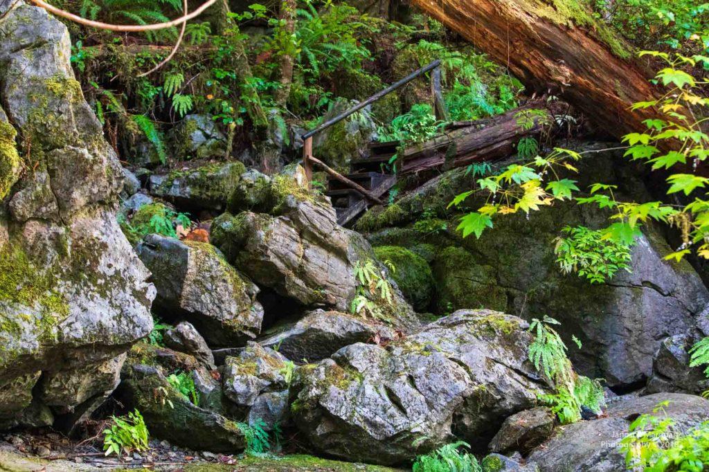 Holztreppe über Steine in kanadischem Regenwald