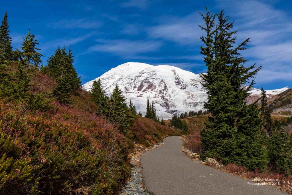 Mt. Rainier im Hintergrund, ein von Bäumen gesäumter Weg im Vordergrund.