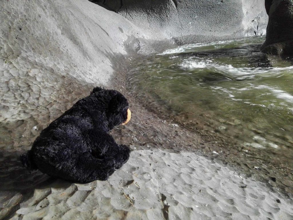 Beary sitzt am Wasser und hofft auf einen Fisch.