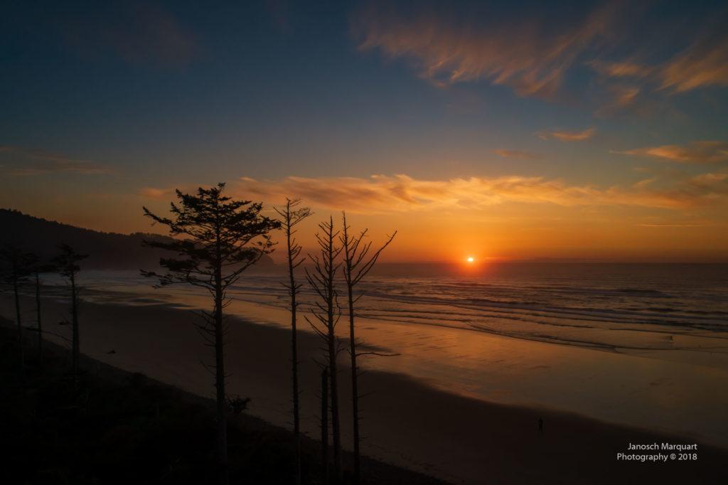 Sonnenuntergang über dem Pazifik mit Bäumen im Vordergrund