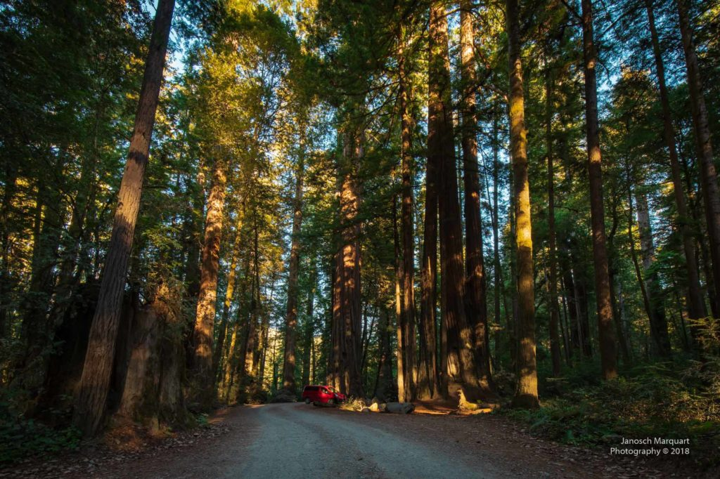 Howland Hill Road im Redwoodwald.