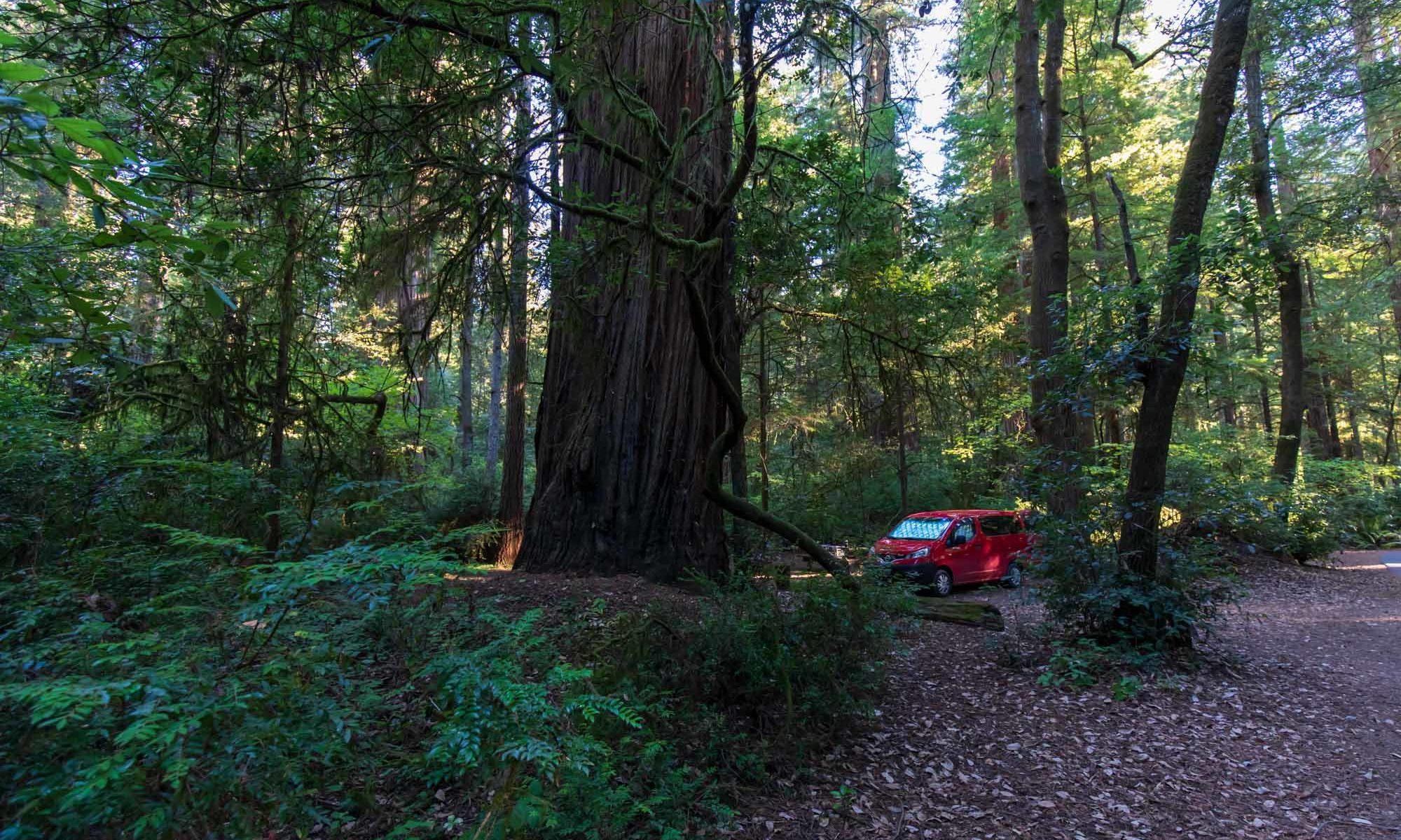 Roter Campervan versteckt zwischen Bäumen.