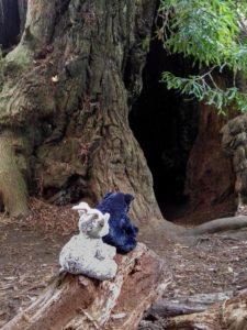 Balznerbock und Beary sitzen vor einem hohlen Redwood.