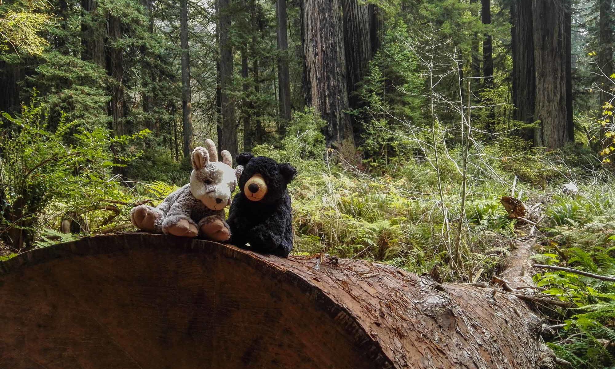 Balznerbock und Beary sitzen auf einem grossen umgefallenen Baumstamm