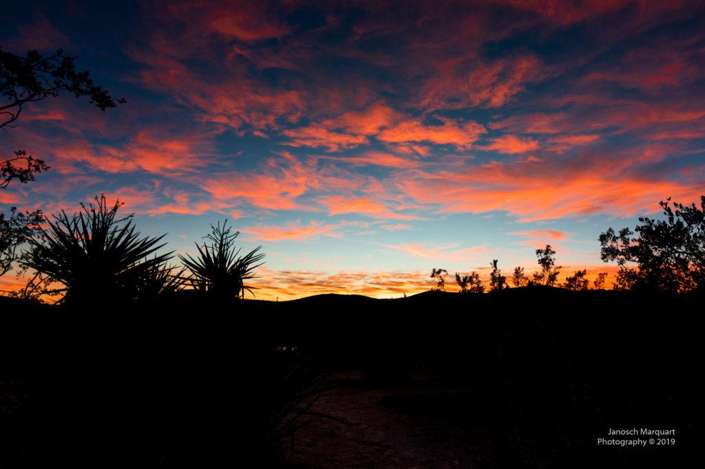 Sonnenuntergang mit Kakteen im Vordergrund im Joshua Tree Nationalpark