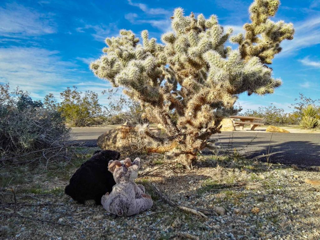 Beary und Balznerbock bestaunen einen Kaktus.