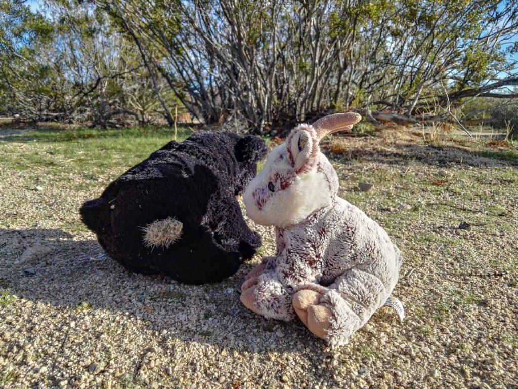 Beary hat ein Stück Kaktus im Hintern. Balznerbock sitzt daneben und versucht zu helfen.