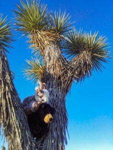 Balznerbock und Beary sitzen im Joshua Tree