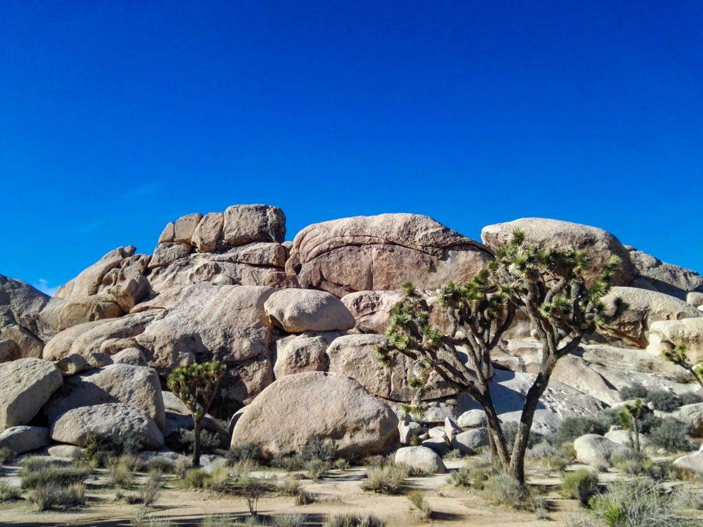 Felsen in der wüste, mit Joshua Trees davor.