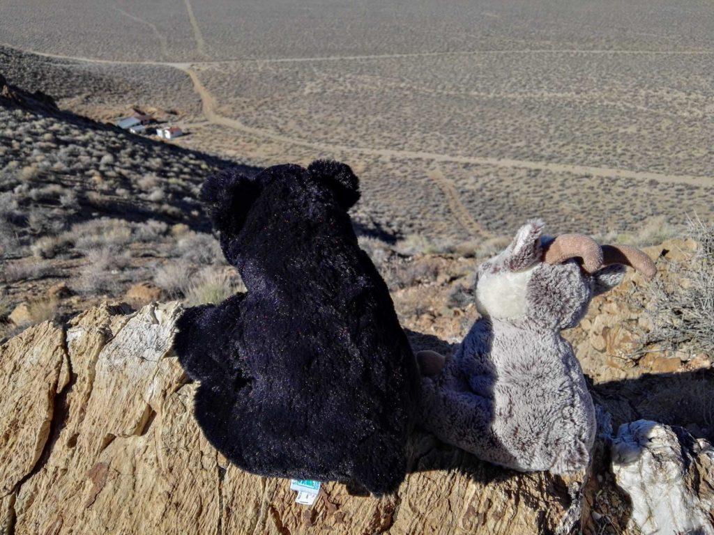 Balznerbock und Beary sehen von einem Felsen aus auf eine Ghost Town.
