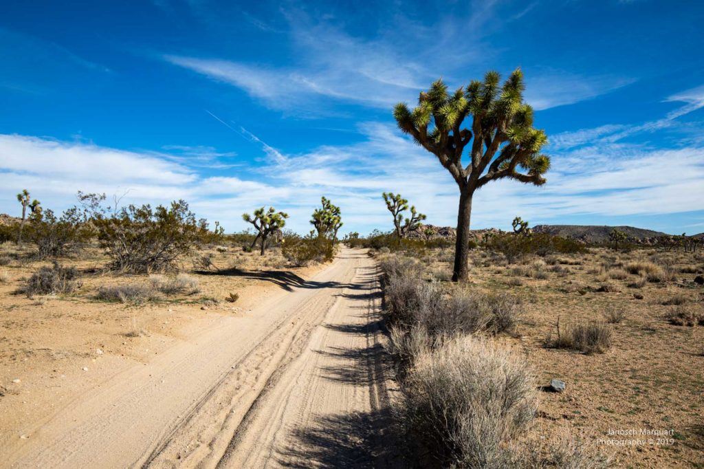 Backcountryroad im Joshua Tree Nationalpark