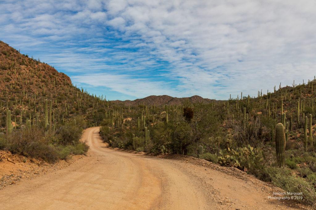 Unbefestigte Strasse im Saguaro Nationalpark
