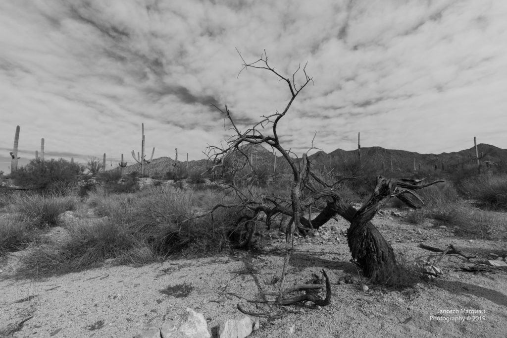 Blick in den Saguaro Nationalpark