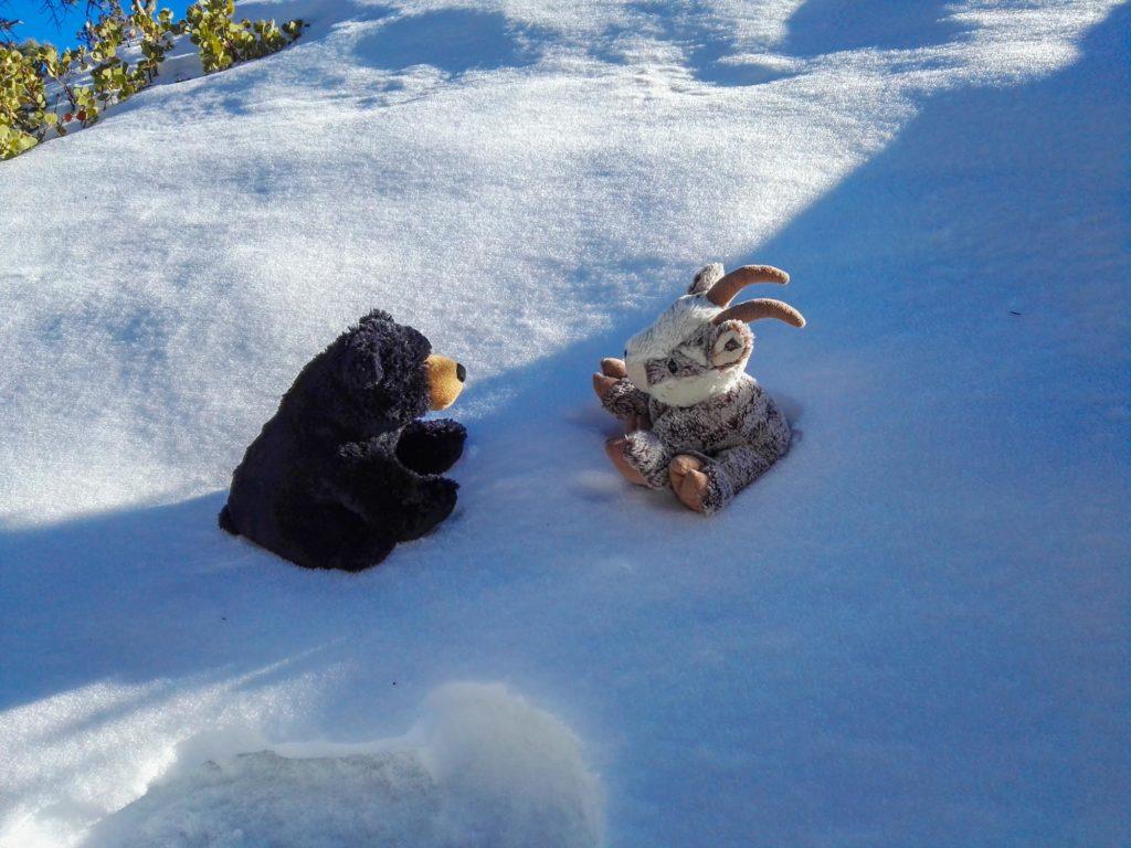 Balznerbock und Beary sitzen im Schnee