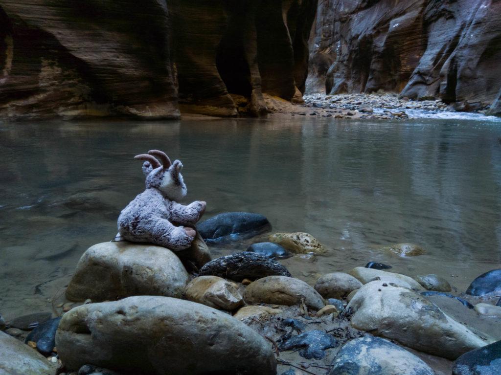 Balznerbock sitzt auf einem Stein und schaut ins Wasser.