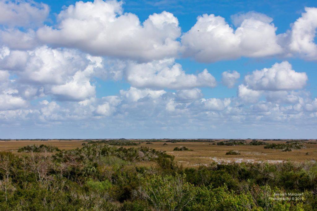 Blick vom Aussichtstrum im Shark Valley im Everglades Nationalpark über die Sümpfe.