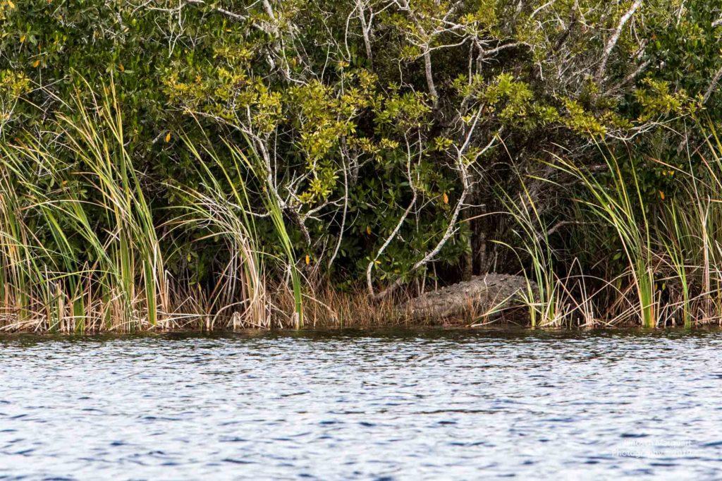 Blick auf ein 5 Meter langes Krokodil mit der Bezeichnung Crockzilla.